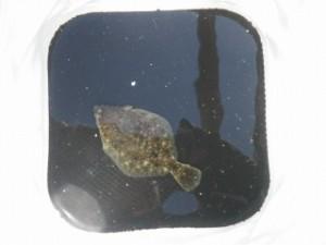 2012.2.4 東扇島西公園 釣果