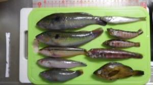 三崎港白灯 2012.6.2 釣果