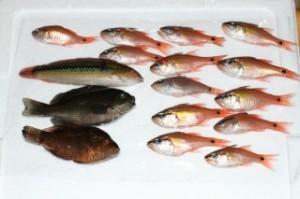 2010.10.23 花暮岸壁釣果