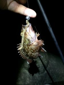 カサゴ 虫ヘッド3.0g 2015.4.28 福浦岸壁釣果