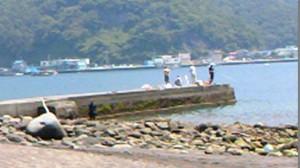 御浜岬 鳥居前の突堤 干潮時