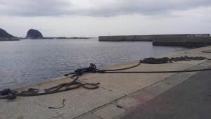 毘沙門港内 浅い場所